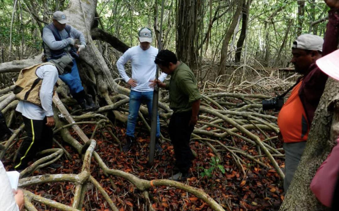 Conservar y restaurar los bosques de manglar en Latinoamérica