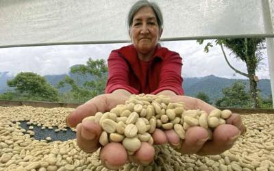 El aroma del café de altura de Ecuador gana mercados
