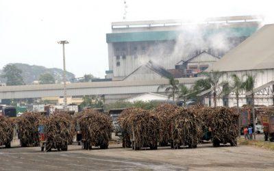 Producción de caña de azúcar y etanol genera 200.000 plazas de trabajo, según la Asociación de Biocombustibles del Ecuador