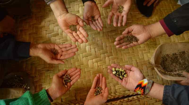 Campaña para proteger semillas ancestrales