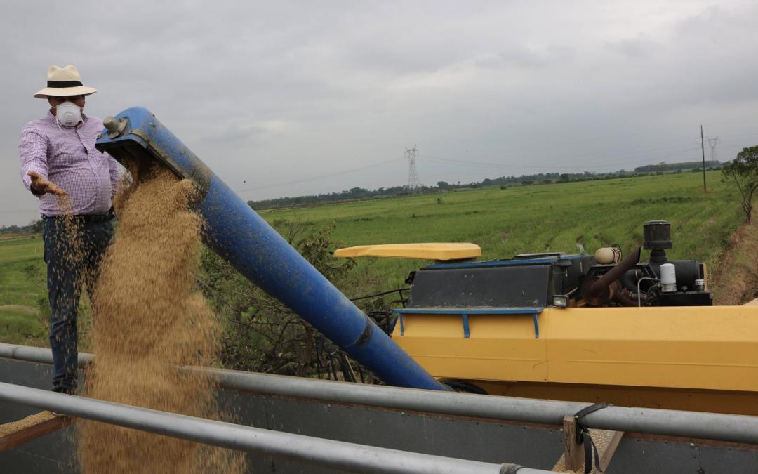 """Ministerio de Agricultura asegura que precios del arroz fueron fijados técnicamente en mesas de diálogo, que hay reclamos """"justificados y otros de tinte político"""""""