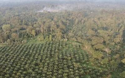 Cuatro comuneros en Esmeraldas deberán pagar multa a la palmicultora Energy & Palma