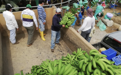 La 'receta' del Banco Mundial para que el sector privado ayude a la reactivación