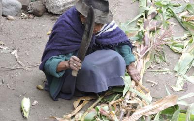 Intercambio de semillas harán este 22 de septiembre los 44 gobiernos parroquiales de Tungurahua por el Kuya Raymi o la etapa de la fertilidad de la tierra