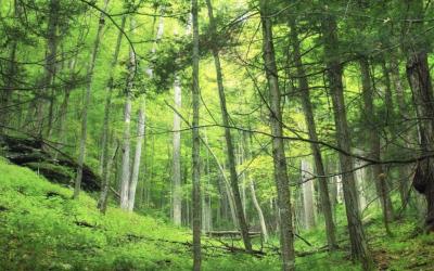 Asamblea aprobó la Ley Reformatoria al Código Orgánico del Ambiente